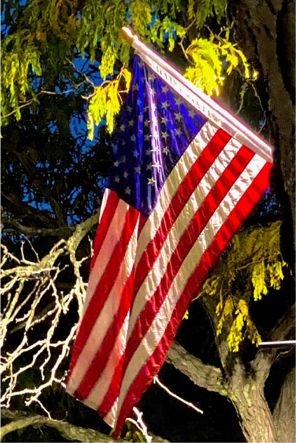 American Flag In Tree At Night
